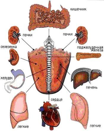 3720816_yazik_diagnostika (350x441, 88Kb)