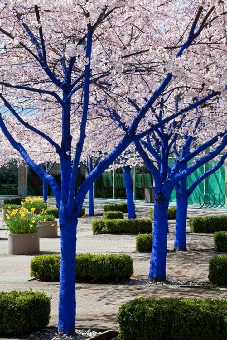 10 árboles Del Mundo Que Llaman La Atención No Solo Por Sus Colores Sino También Por Sus Asombrosas Características Arbol Del Amor Eucalipto Arcoiris Arboles