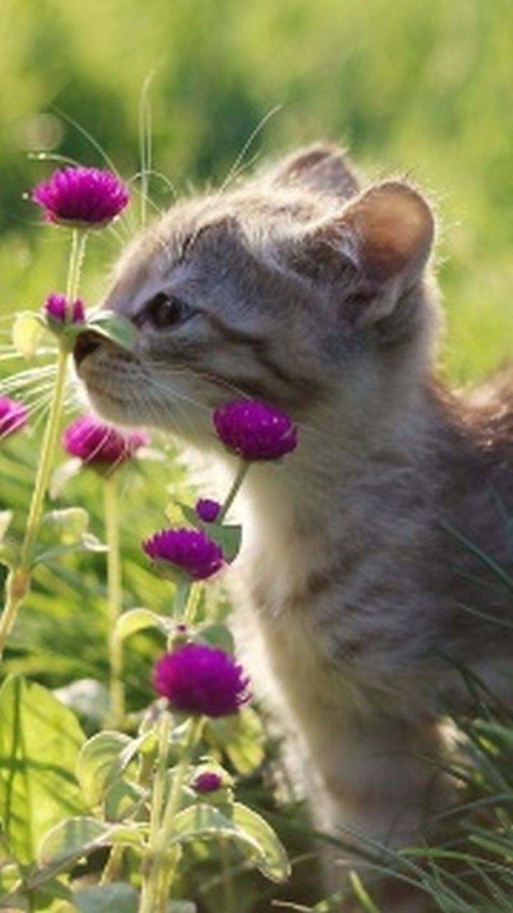 """Kitten and pink flowers. Support """"Southern California Cat Adoption Tails"""" www.catadoptiontails.org."""