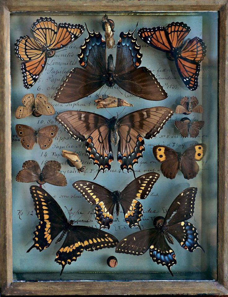 butterfly/moths