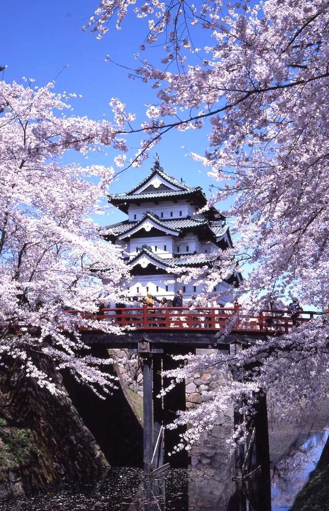 Tohoku Is One Of The Best Places To See Cherry Blossom In Japan With Blooms Just As Beautiful As In 2020 Beautiful Places In Japan Japan Landscape Cherry Blossom Japan