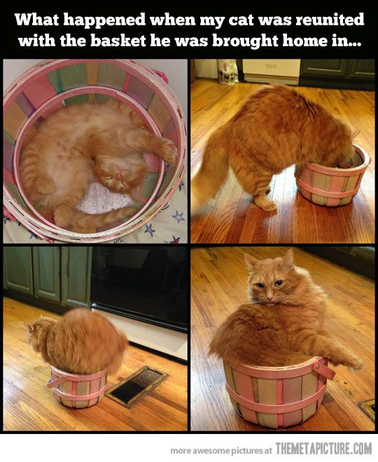 Cat reunited with his old basket…