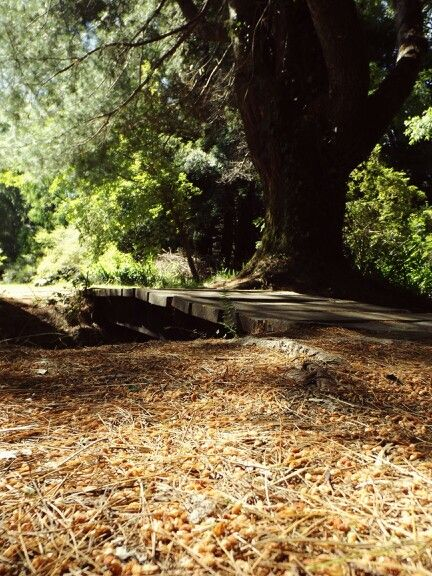 Jardín botánico de la universidad austral