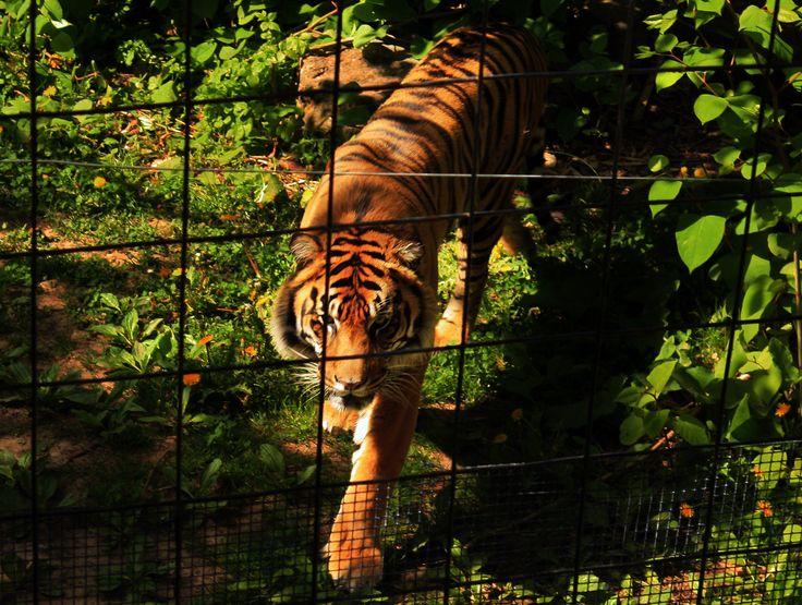Karson Simpson Zoo Trip Picture