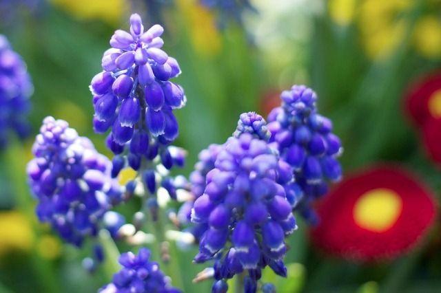 A hosszú, hideg és zord tél után beköszönt az év legizgalmasabb és egyben a legszeszélyesebb hónapja az április