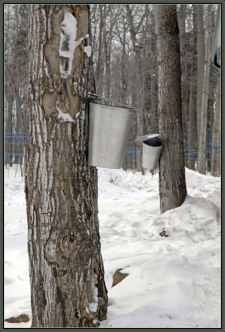 47 best sugar shack images on pinterest sugar maple syrup and