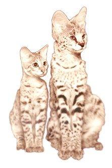 gato savannah y gato serval