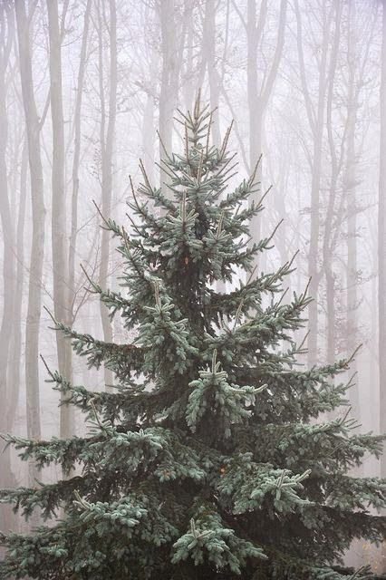 The perfect Christmas tree!  Splendid Sass: PINTEREST AT CHRISTMASTIME ~ PART IV
