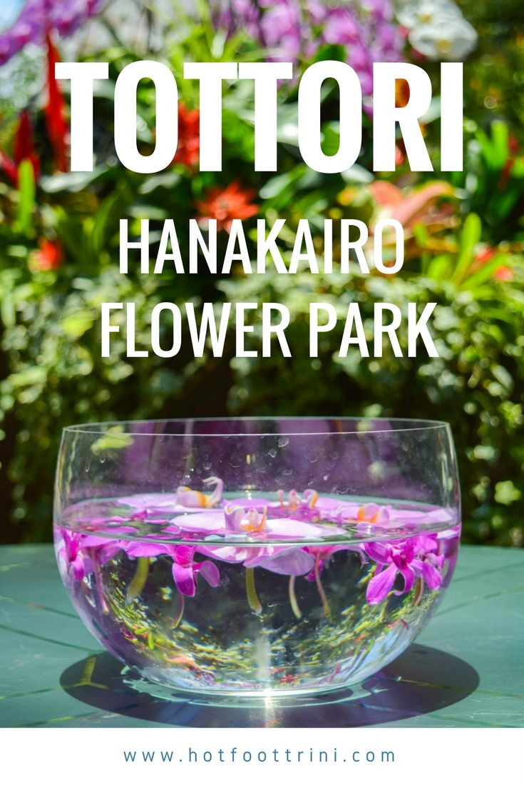 Tottori Hanakairo Flower Park,one of the largest in Japan, is located in Nanbu, a tiny pastoral town surrounded by the rolling mountains of the Daisen Oki National Park. It's a well-kept nat…