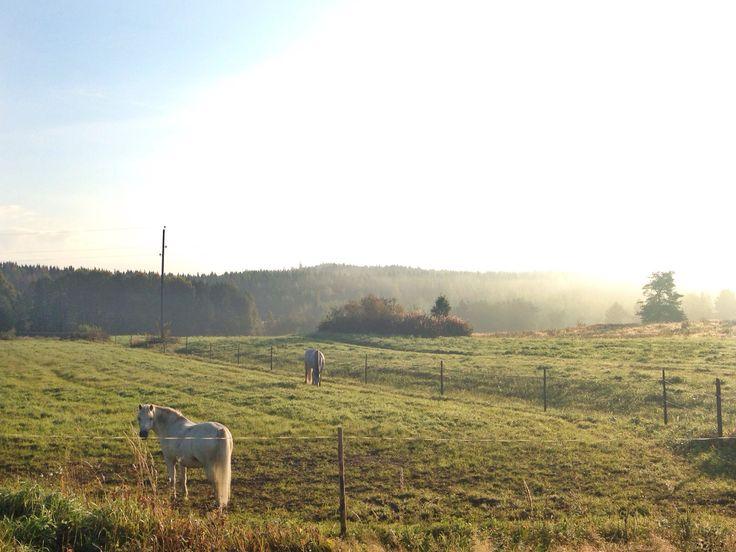Syyskuun aamu Jämsässä 2014.