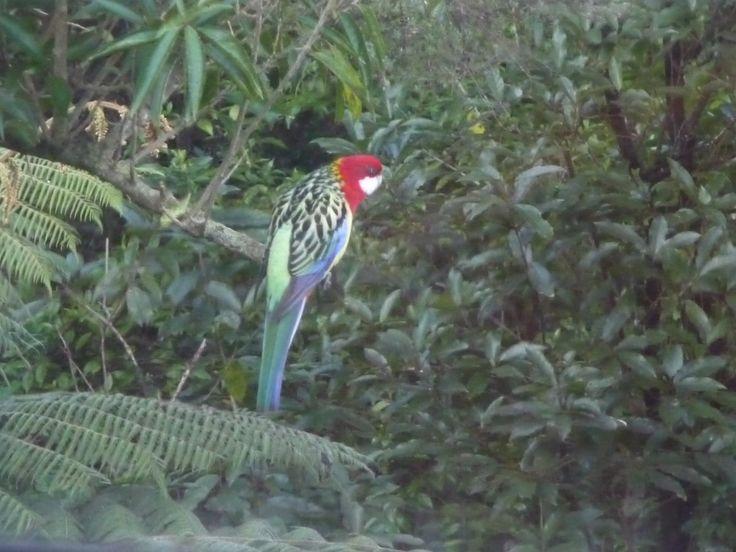 parrot in June 2013