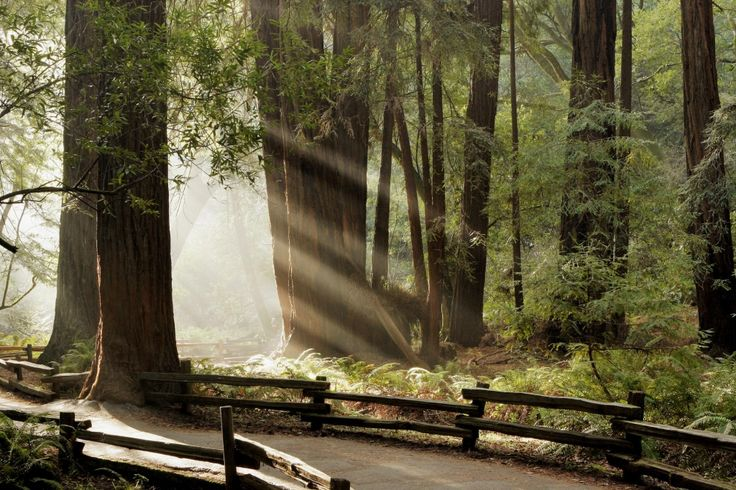 A Vacation to the Magnificent Muir Woods National Monument  - Northern California