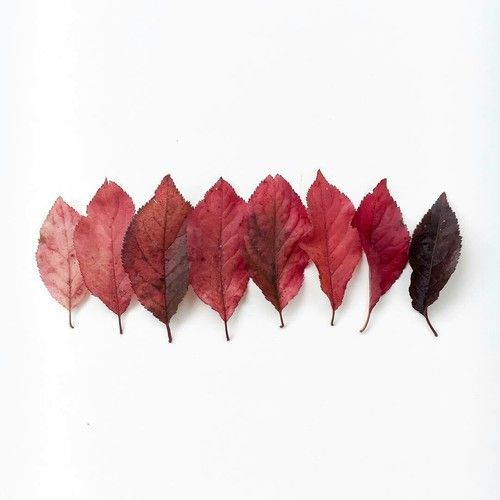 Image shared by Nelly. Find images and videos about white, red and leaves on We Heart It - the app to get lost in what you love.