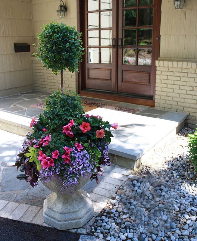 Eugenia topiary with pink impatiens, pink hibiscus, lobelia, potato vine