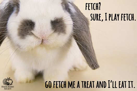 Haha!! Yep. Pretty much how it goes in my home with my 2 lil bunnibinos!