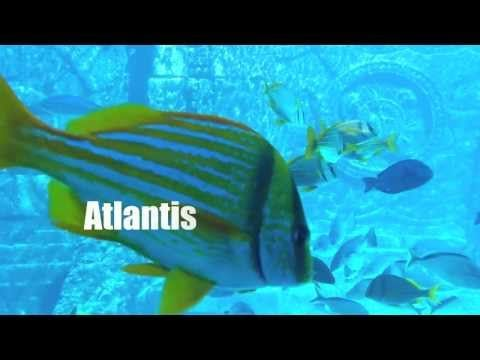 Footage from ATLANTIS on Paradise Island, The Bahamas with music by Grant McCauley.  http://soundcloud.com/grant-mccauley #atlantis #paradiseisland #bahamas #nassau