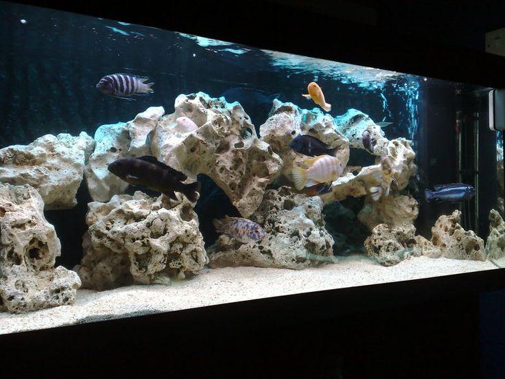 Explore Aquariums Fish, African Cichlid Aquarium, and more!