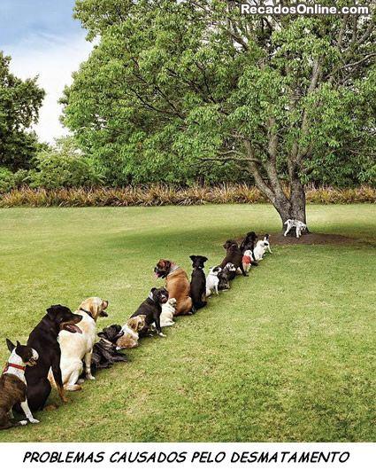Um banheiro para tanto cachorro...