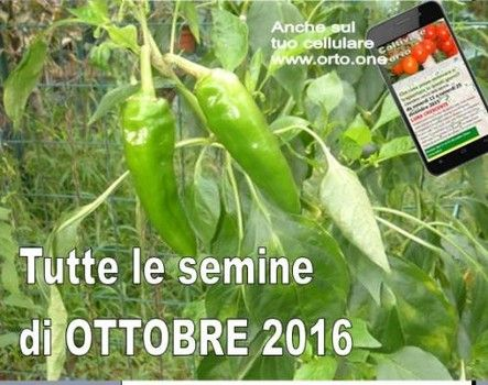 Semine in luna crescente di ottobre 2016 (da domenica 2 a sabato 15) - Coltivare l'orto