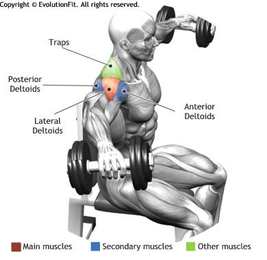 SHOULDERS -  SEATED SIDE LATERAL RAISE