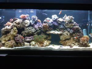 55 Gallon Aquarium - Stapp/Wikimedia Commons