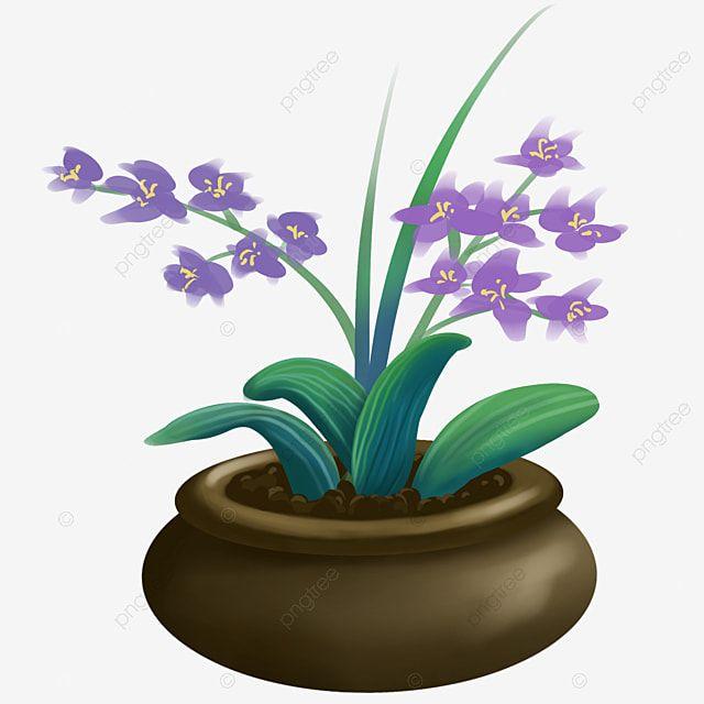 Gambar Pokok Bunga Anggrek Tumbuhan Pasu Anggrek Clivia Tumbuhan Pasu Clivia Hiasan Png Dan Psd Untuk Muat Turun Percuma Bunga Anggrek Tanaman Indoor