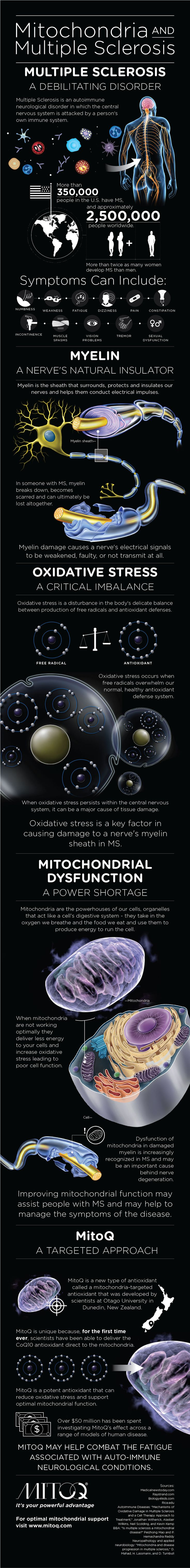 Infographic: Mitochondria and Multiple Sclerosis #MS symptoms #Oxidative Stress