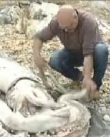 Spagna: calamaro gigante arena su spiaggia » Spettegolando