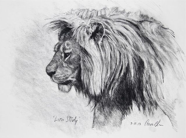 """drawing animals with charcoal 