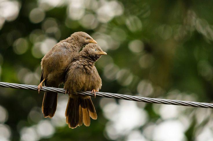 Curious birds