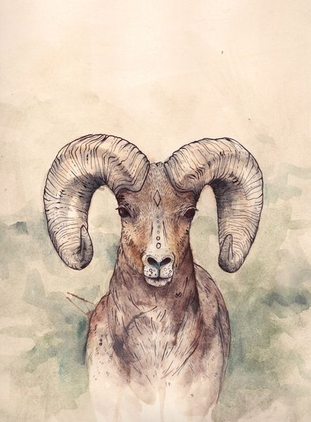 The Ram is such a Beautiful and powerful animal. Love this painting!