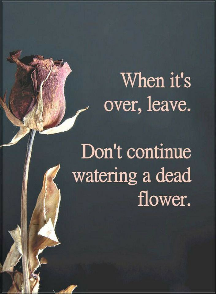 Quotes When it's over, leave. Don't continue watering a dead flower.