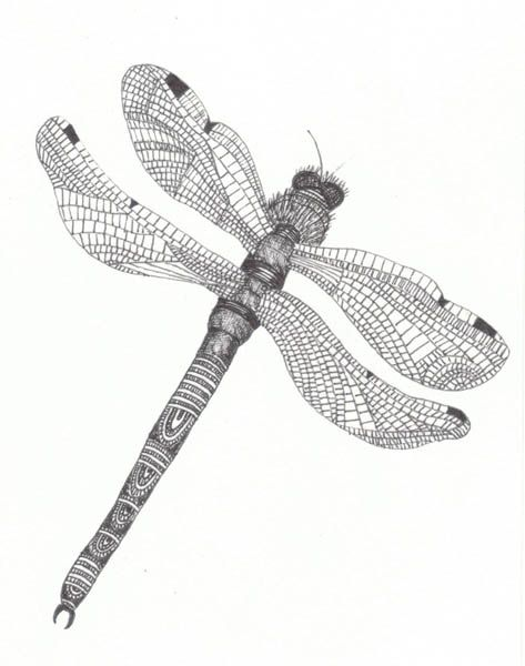 dragonfly drawings images - Google-søgning
