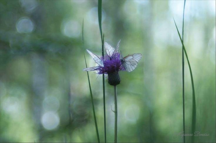 """Купить """"Сердце леса"""" художественная фотография - мятный, авторская фотография, авторская фотокартина, фотография авторская"""