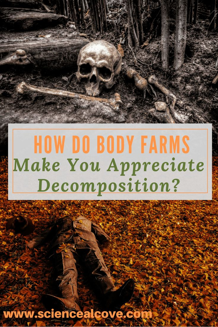 Body Farms provide loads of data to law enforcement agencies for determining time of death. They provide invaluable forensic data for solving homicides. The two best reasons to donate your body to a body farm are a green burial and your legacy of advancing scientific progress. Who knows? You might even provide the evidence needed to catch a killer. #forensics #science #crimescenes #anthropology #highschool #forkids