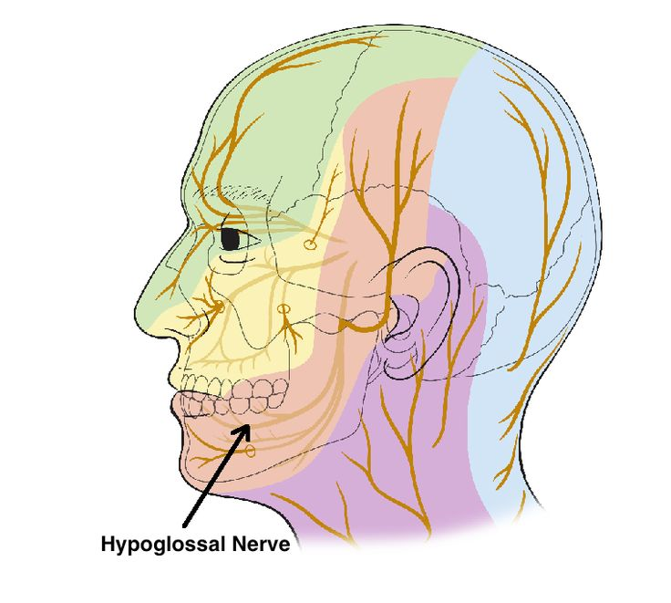 RESEARCH: Relationship of the Hypoglossal Nerve to C1 #Chiropractic