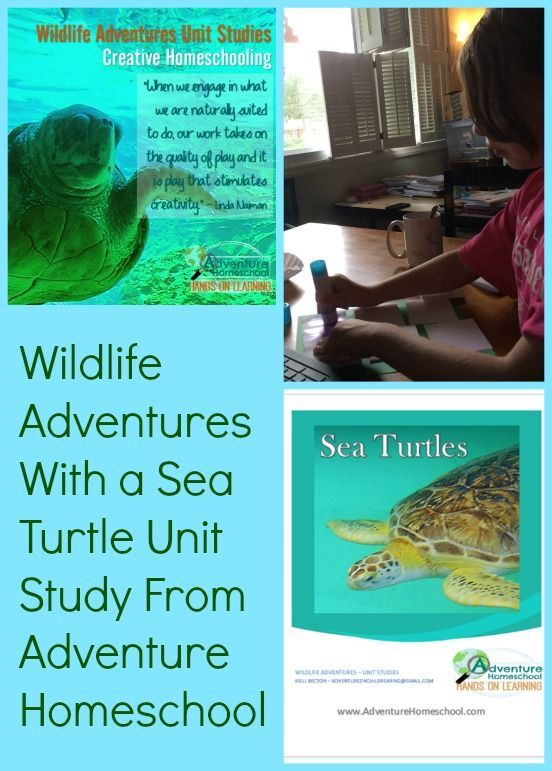 a study of the sea turtle Wageningen researchers and colleagues from other research institutions   green sea turtle digging its own watery grave due to invasion of.