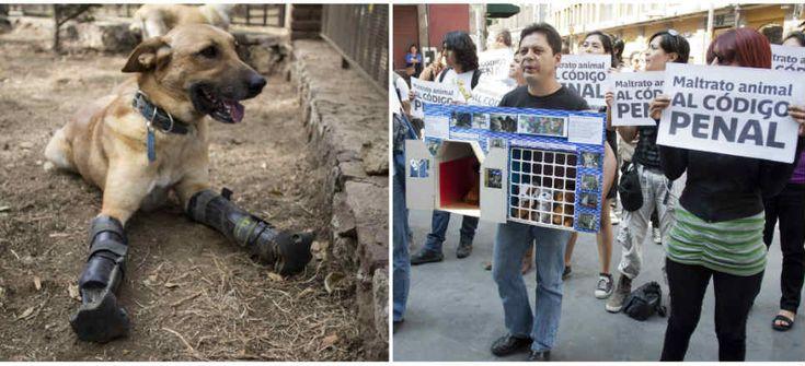 Cárcel o multas a quien maltrate animales en el DF - Aristegui Noticias