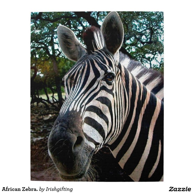 African Zebra. Puzzles