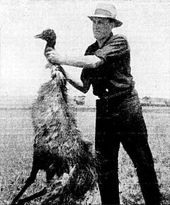 """The Great Emu War was a nuisance wildlife management military operation undertaken in Australia over the latter part of 1932 to address public concern over the number of emus said to be running amok in the Campion district of Western Australia. The unsuccessful attempts to curb the population of emus, a large flightless bird indigenous to Australia, employed soldiers armed with Lewis guns—leading the media to adopt the name """"Emu War"""" when referring to the incident."""