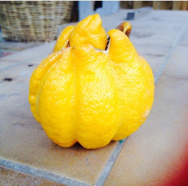 Lemon home grown.