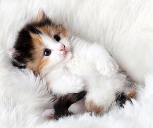 cat, cute, and animal kép