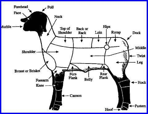 parts of a lamb | Livestock Judging! | Pinterest
