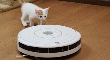 掃除、ロボット、ルンバ… 12頭の猫がいる我が家に新しい家族がやって来た!
