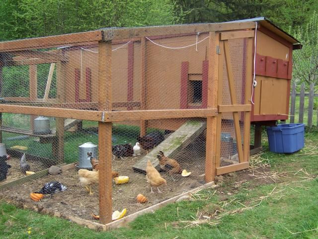 289 best wood pallet chicken coops images on pinterest Chicken coop from pallet wood