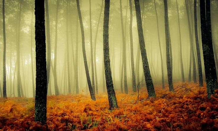 A Foggy Day deep in the Woods by Gilbèrt Papè