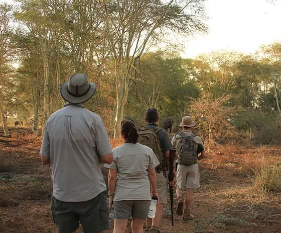 Go on a walking tour in the Kruger National Park - here the walkers come face to face with an elephant | Die stappers sien 'n olifant op die derde dag van die staptog