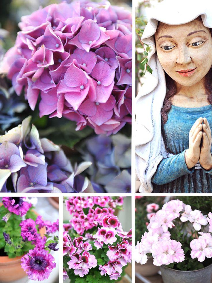 Letos se překonávám! Náš betonový dvorek kvete. Krásné letní dny všem, bel.