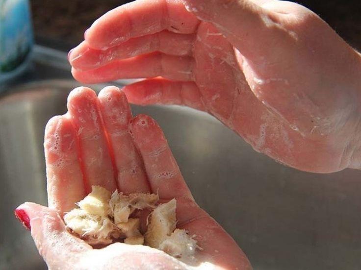 Cómo obtener jabón y champú de esta sorprendente planta- exprimir