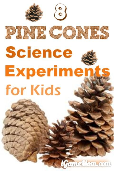 8 pine cone science experiments for kids - learn about pine cones and research skills #LearnActivities